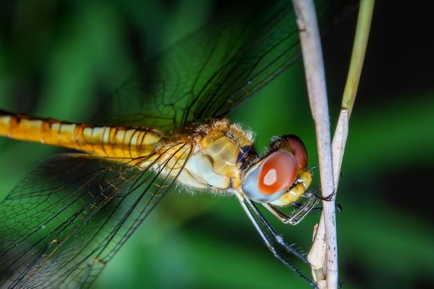 Макрос стрекозы на бамбуковой палочке в лесу