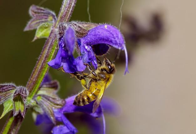 花から花粉を集める昆虫のマクロ