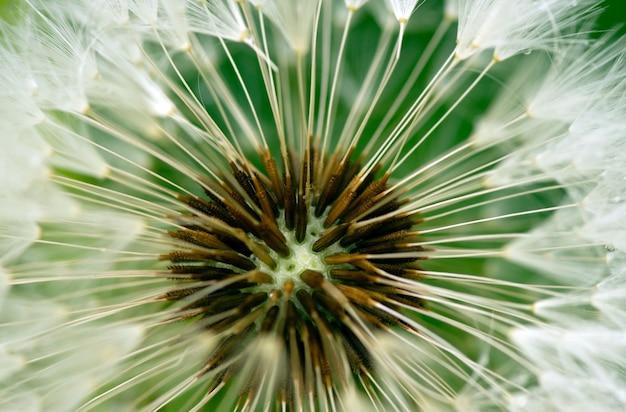花の中心のマクロ