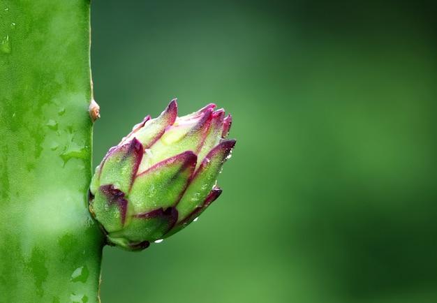 선택적 포커스가 있는 용 꽃의 매크로