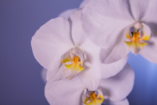 화려한 흰 난초 꽃의 매크로