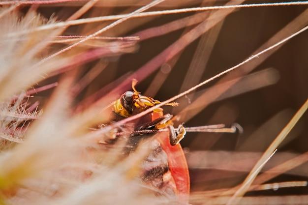 Макрос божья коровка прячется на сухой пыльце в природе. выбирающий фокус