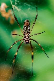 クモのマクロは緑の牧草地の背景の上に草の葉を歩く
