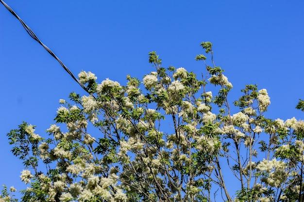 田舎道の白い花のマクロ
