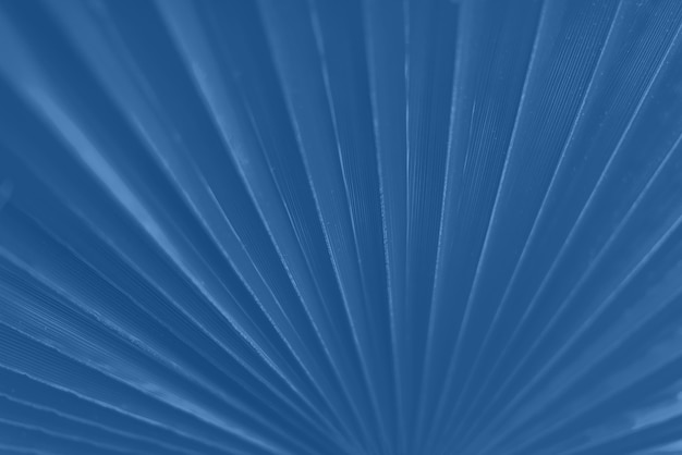 Macro of palm leaf with copy space in monochrome color background. sunlight effect and sunny bokeh. trendy blue and calm color.