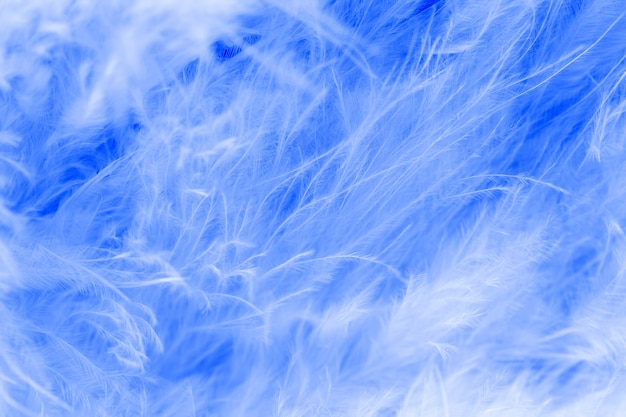 Macro of pastel bird fluffy feathers in soft color and blur style for background