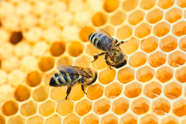 Macro photo of a bee hive on a honeycomb with copyspace. bees produce fresh, healthy, honey.