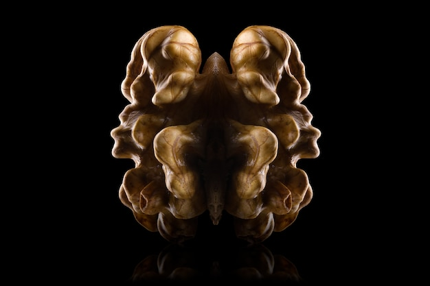 Macro photo of kernel walnut with reflection isolated on a black background with clipping path and reflection.