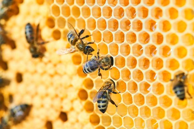 Copyspace와 벌집에 꿀벌 하이브의 매크로 사진. 꿀벌은 신선하고 건강하며 꿀을 생산합니다.