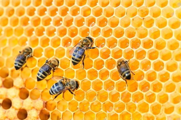 ハニカム上の蜂の巣のマクロ写真