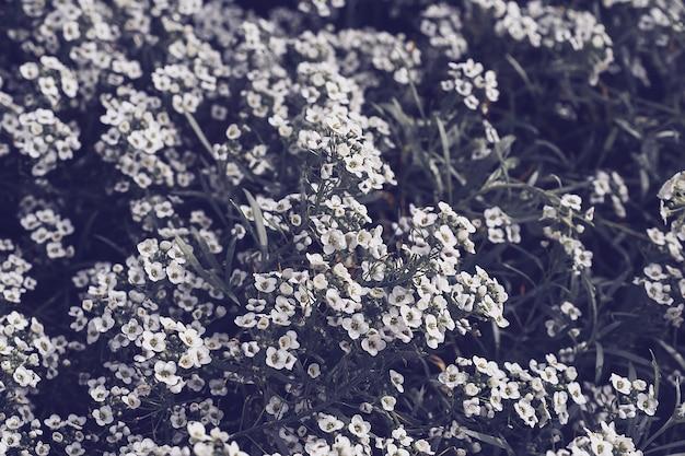 Макро фотография сиреневого цветка на темном фоне