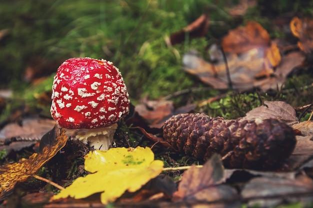 Макро фото красного мухомора в осеннем лесу