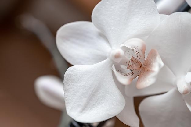 Макро фотография белой орхидеи