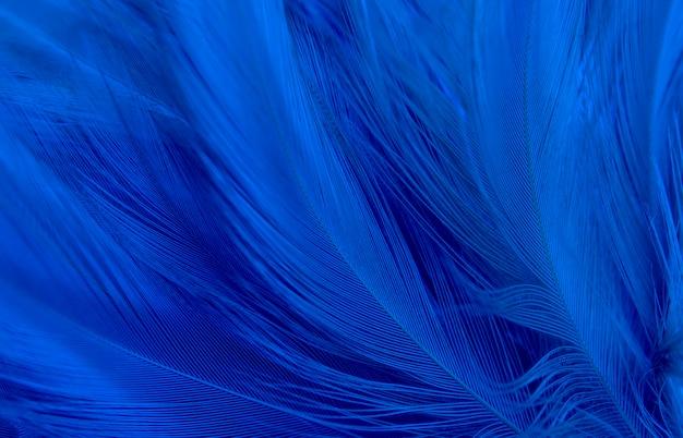 美しい青い暗い羽ヴィンテージテクスチャラインのマクロ写真