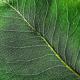 Макро фотография темно-зеленого листа. натуральная прожилка листа как фон для ваших идей. вид сверху
