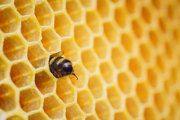 벌집에 작업 꿀벌의 매크로 사진입니다. 양봉 및 벌꿀 생산 이미지.