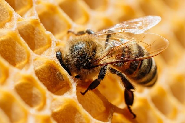 Макро фотография работающих пчел на сотах. изображение пчеловодства и производства меда.