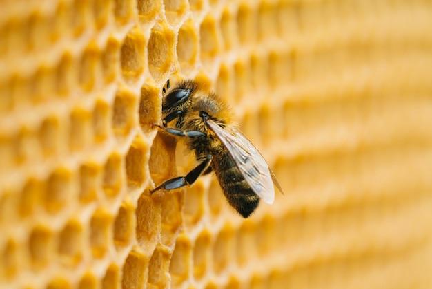 벌집에 작업 꿀벌의 매크로 사진입니다. 양봉 및 벌꿀 생산 이미지