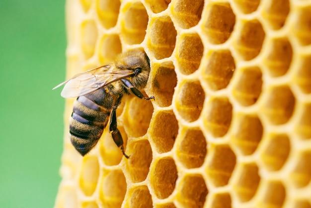 Макро фотография работающих пчел на сотах пчеловодства и производства меда.