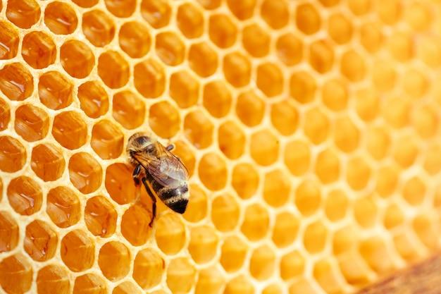 벌집 양봉 및 꿀 생산 이미지에 작업 꿀벌의 매크로 사진