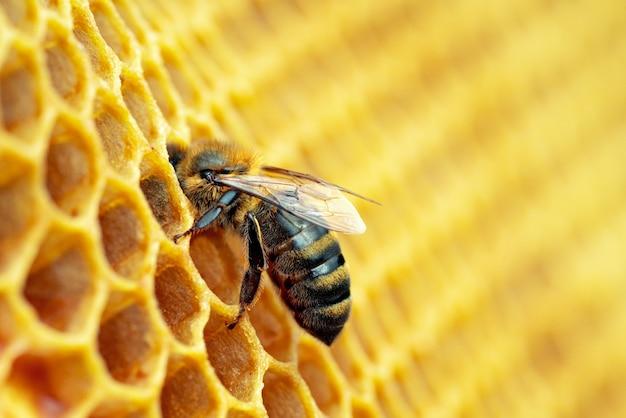 Макро фотография работающих пчел на сотах.