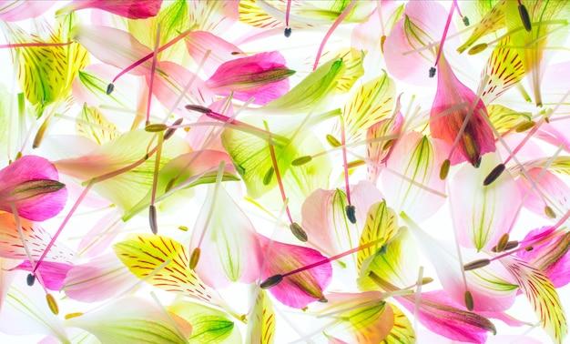 매크로 사진 질감 꽃 수술과 꽃잎입니다.