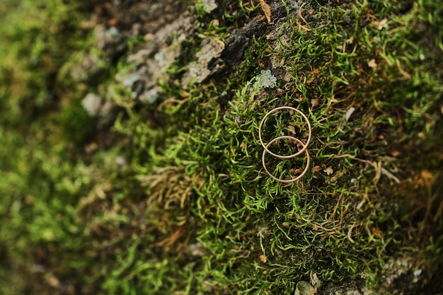 Macro photograph of wedding and engagement rings sitting on top of moss