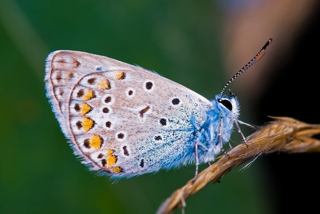 Macro photography of the butterfly in nature