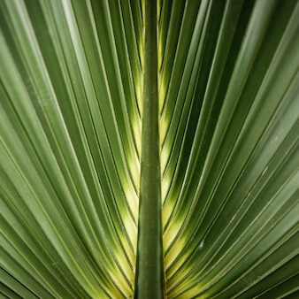 Macro photography of green tropical leaf
