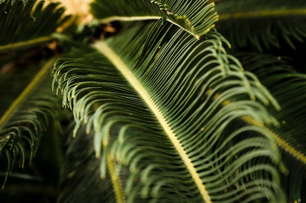Macro photography of green tropical plant