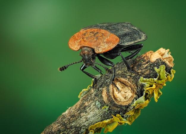 딱정벌레의 매크로 사진