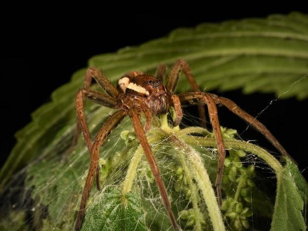 거미의 매크로 사진