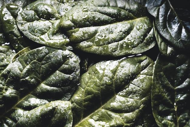 신선한 시금치의 매크로 사진입니다. 유기농 식품의 개념. 건강 식품, 비건