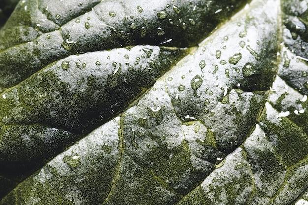 新鮮なほうれん草のマクロ撮影。有機食品の概念。健康食品、ビーガン