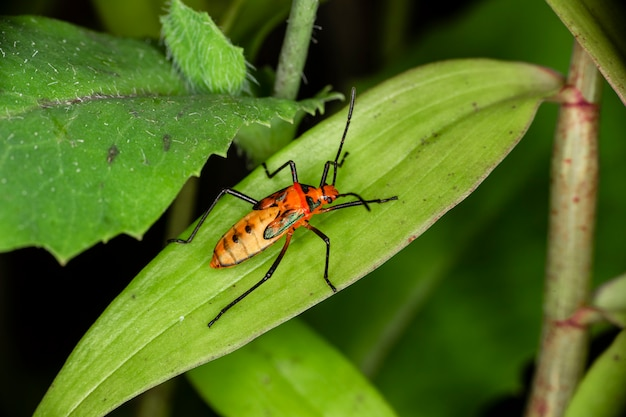 Macro photography of small insects.