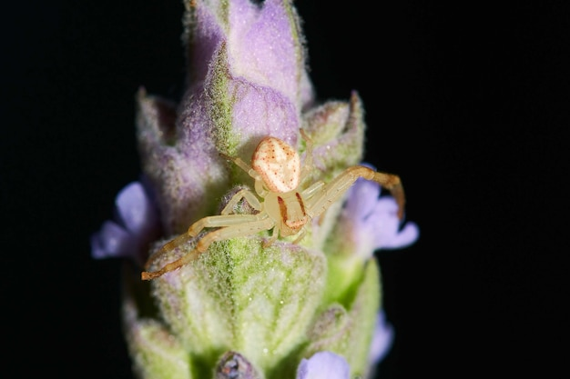 Macro photography of a spider on a flowering plant