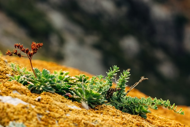 Macro photography of succulents and mosses on the surface of the mountain.