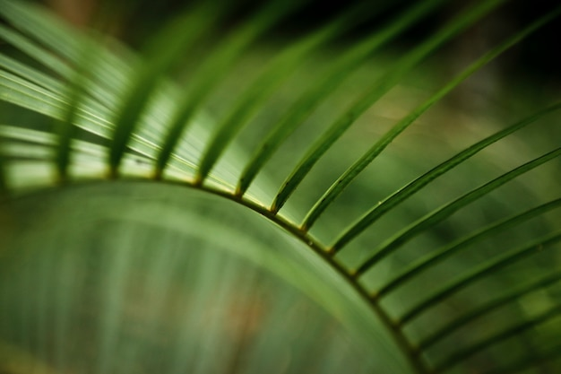 Macro photography of tropical leaf