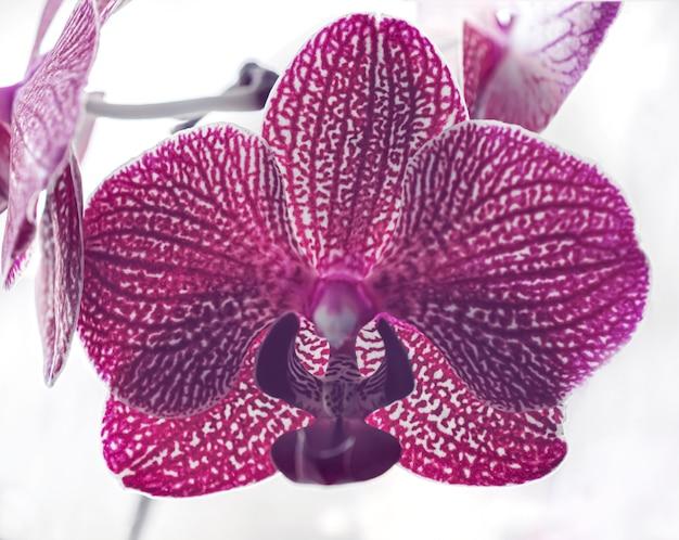Макросъемка фиолетовый цветок орхидеи