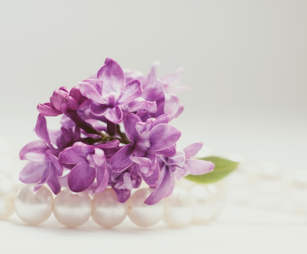 Macro picture of bright violet lilac flowers on white