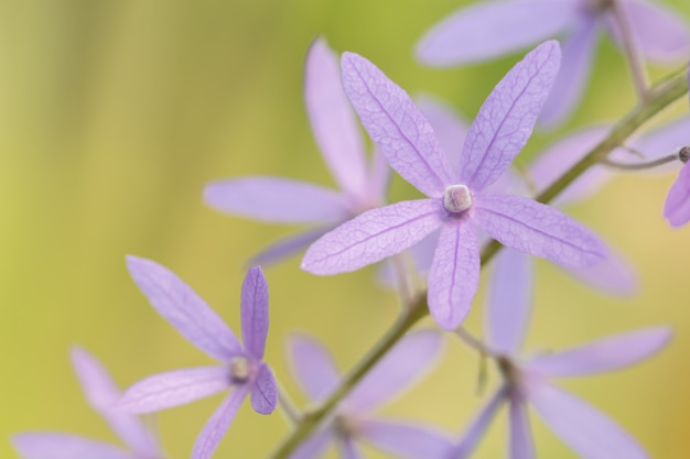 Macro purple flower background