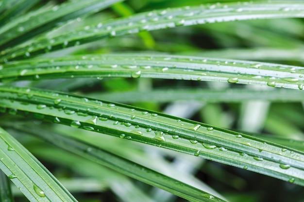 레이디 팜 자연 배경에 매크로 빗방울