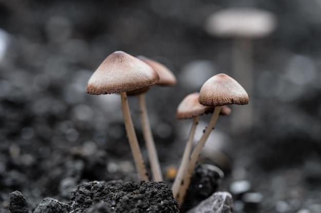 어두운 색조의 자연 작은 곰팡이 버섯의 매크로 촬영(먹지 마십시오).