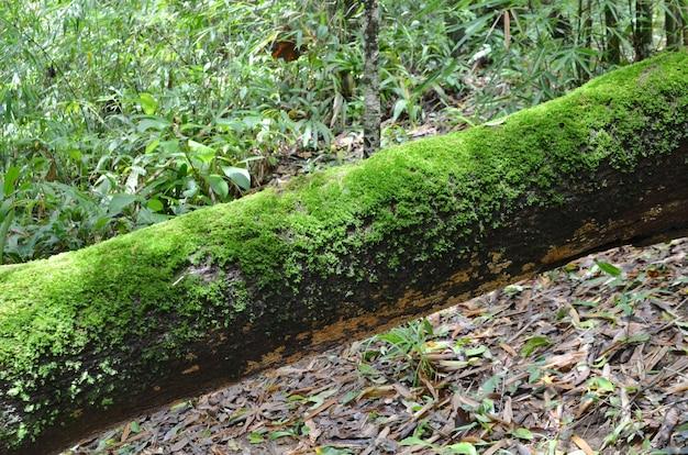 Макрос выстрел в мох на дереве в тропических высокогорных лесах, таиланд.