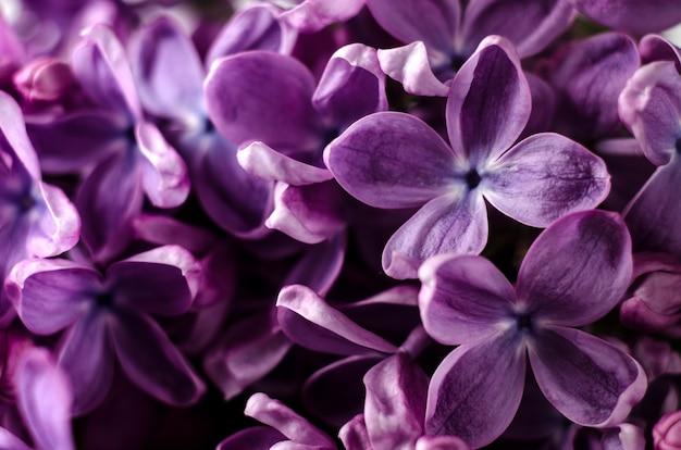 매크로 촬영 밝은 보라색 라일락 꽃 추상 낭만적인 꽃 배경