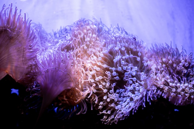 Macro shot of coral in deep sea.