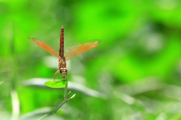 Macro shot of dragonfly on green leaves trees.