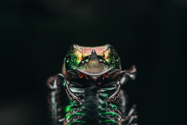 Macro shot of the exotic colourful beetle