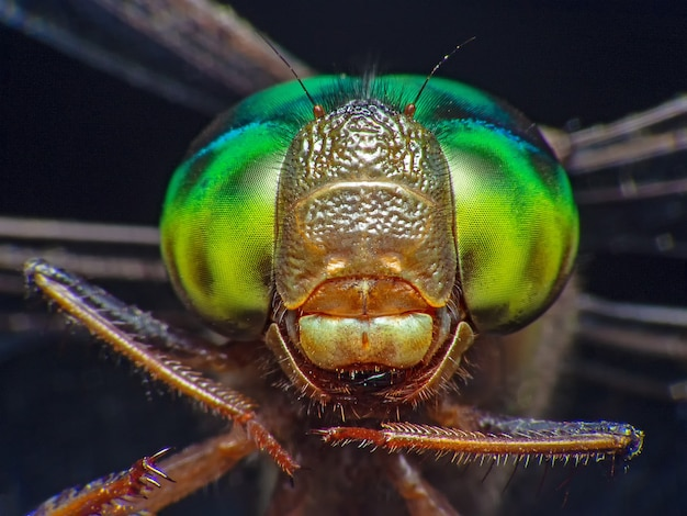 Macro shot eye of dragonfly in wild. selective focus.