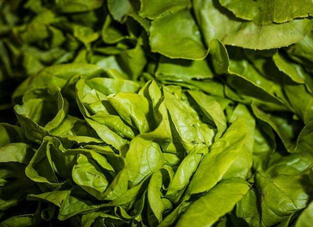 Macro shot of fresh lettuce in shop